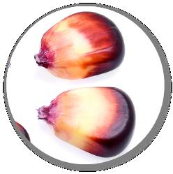 ペルー原産の紫トウモロコシ